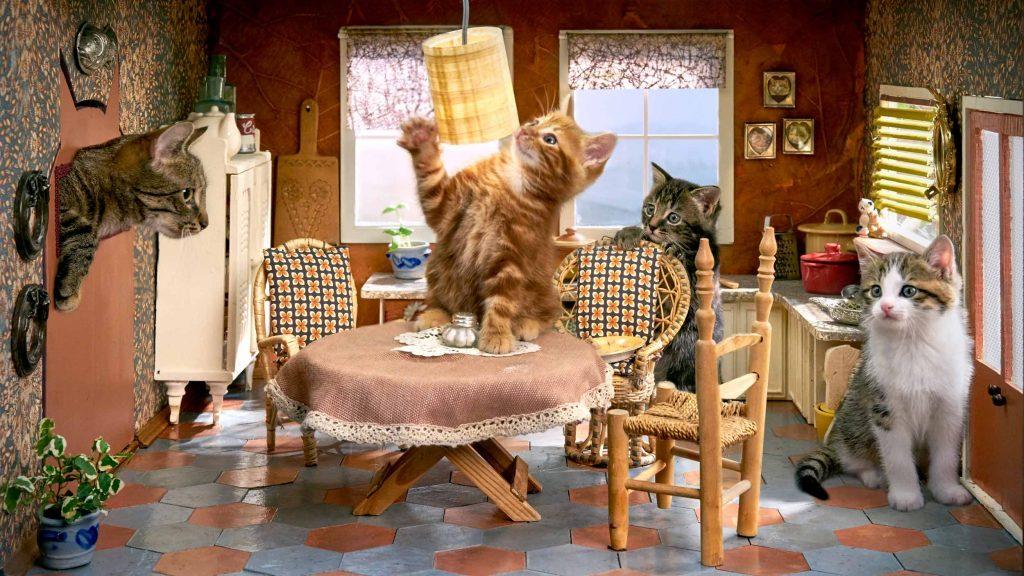 Kittens uit Poesjes 2 zitten in de keuken